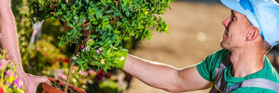 We provide custom landscaping services